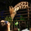 【夜の動物園】夜の動物たちを見に行こう!開閉園時間などの基本情報|人気のポスターなど