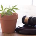大麻(医療用・嗜好用)の合法化が世界中で進んでいるのはなぜ?