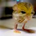 思わず「飼いたい!」という衝動に駆られてしまう、小さくてかわいい動物 7選