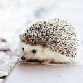 【クイズ付き!!】えええ?そんな動物も!?原宿で気軽に寄れる動物カフェ!!