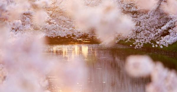 必見!お花見シーズン到来!東京【お花見スポット】を厳選紹介♡
