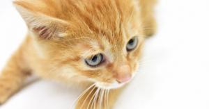 【アニマル動画】可愛い子猫の動画をまとめてみた