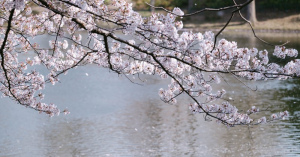 必見!お花見シーズン到来!埼玉【お花見スポット】を厳選紹介♡