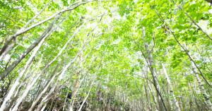 自然を満喫!都内でおすすめ【森林浴・お散歩スポット】を紹介!