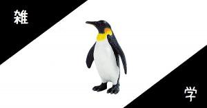 【雑学】森に住むペンギンがいる