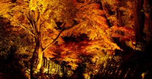 美しい秋を堪能!東京でおすすめ【紅葉スポット】を紹介!