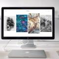 現役WEBライターおすすめ!ブログやSNSで使えるフリー画像5選