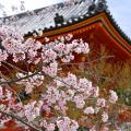 必見!お花見シーズン到来!京都【お花見スポット】を厳選紹介♡