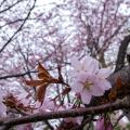 必見!お花見シーズン到来!北海道【お花見スポット】を厳選紹介♡