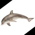 【雑学】アマゾン川にはピンク色のイルカがいる
