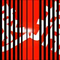 【大阪市】松本純路容疑者ら8人逮捕!10万枚超のわいせつDVD押収