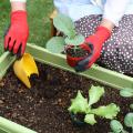 プランターで簡単!家庭菜園を成功させるコツ