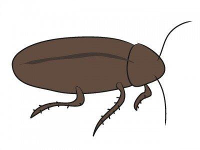 醤油入れにゴキブリ