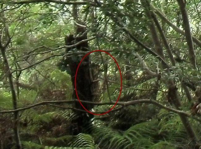 木にへばりついている