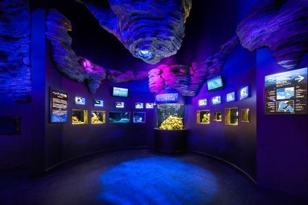 ヘンテコ生き物  世界中からやってきたヘンテコな生物を展示しています。