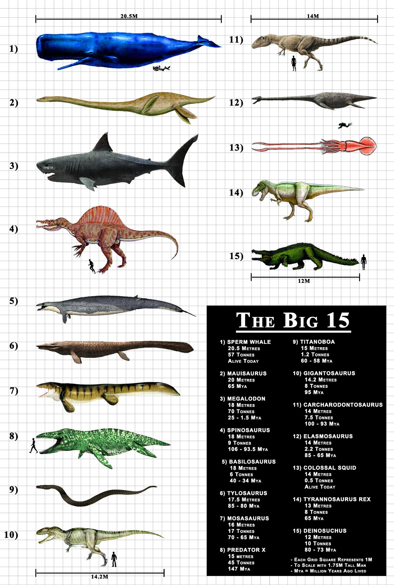 地球上で存在していた生物の大きさランキング トップ15