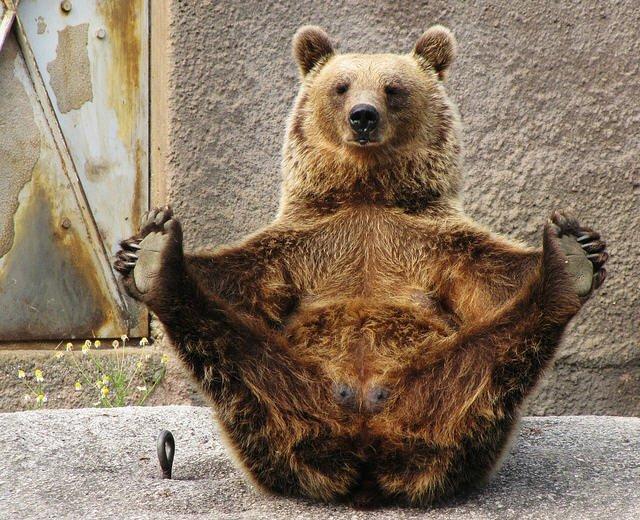 足を広げてストレッチをするクマ