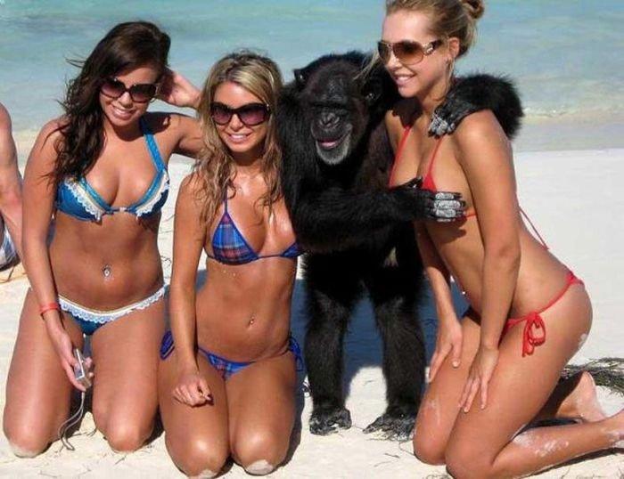 チンパンジーのセクハラ