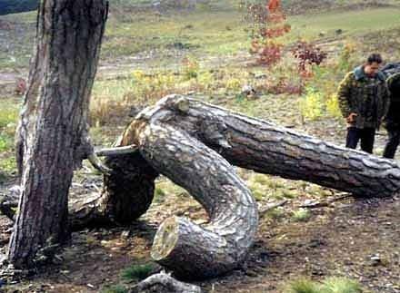 卑猥な木…