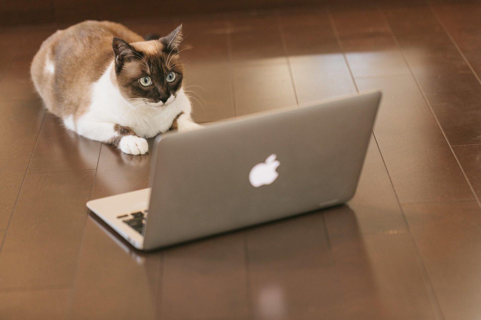「出会い系サイト規制法」
