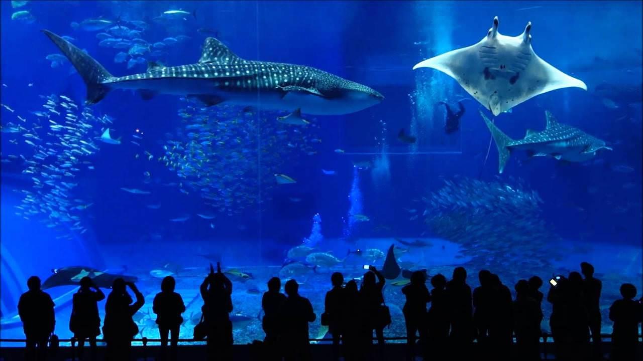 沖縄美ら海水族館(沖縄県)