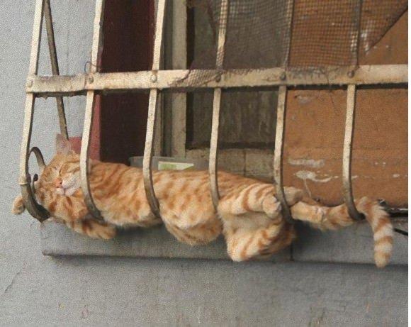 猫「移動めんどい」