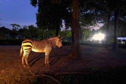 真夜中の動物園を探検