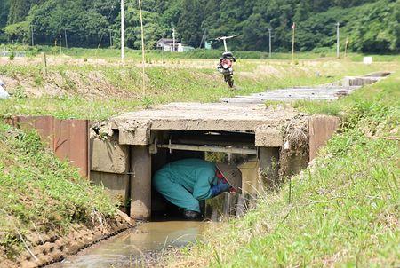 田んぼの水路にある身が隠せる場所でも可
