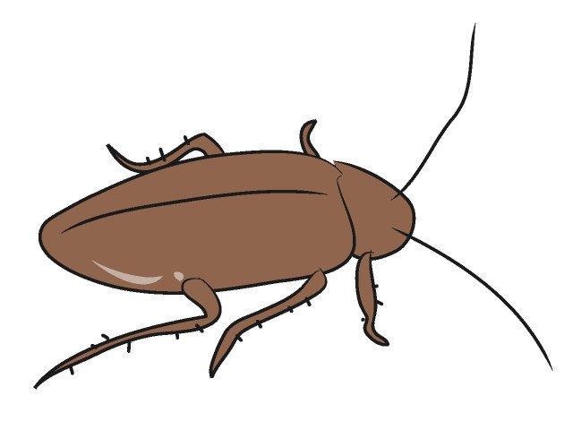 もはや説明不要の害虫ゴキブリ