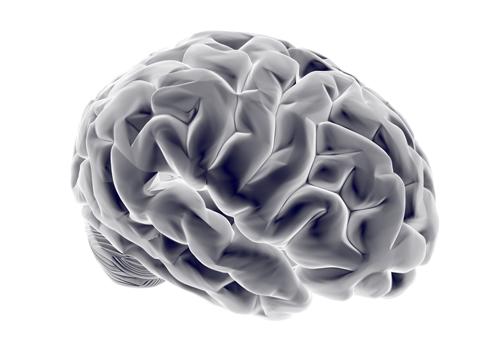 男性の脳は理論的で女性の脳は直感的