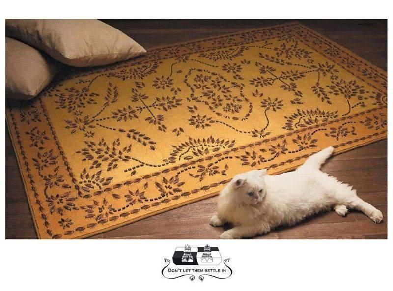 白猫と絨毯