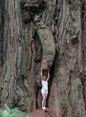 卑猥な大木