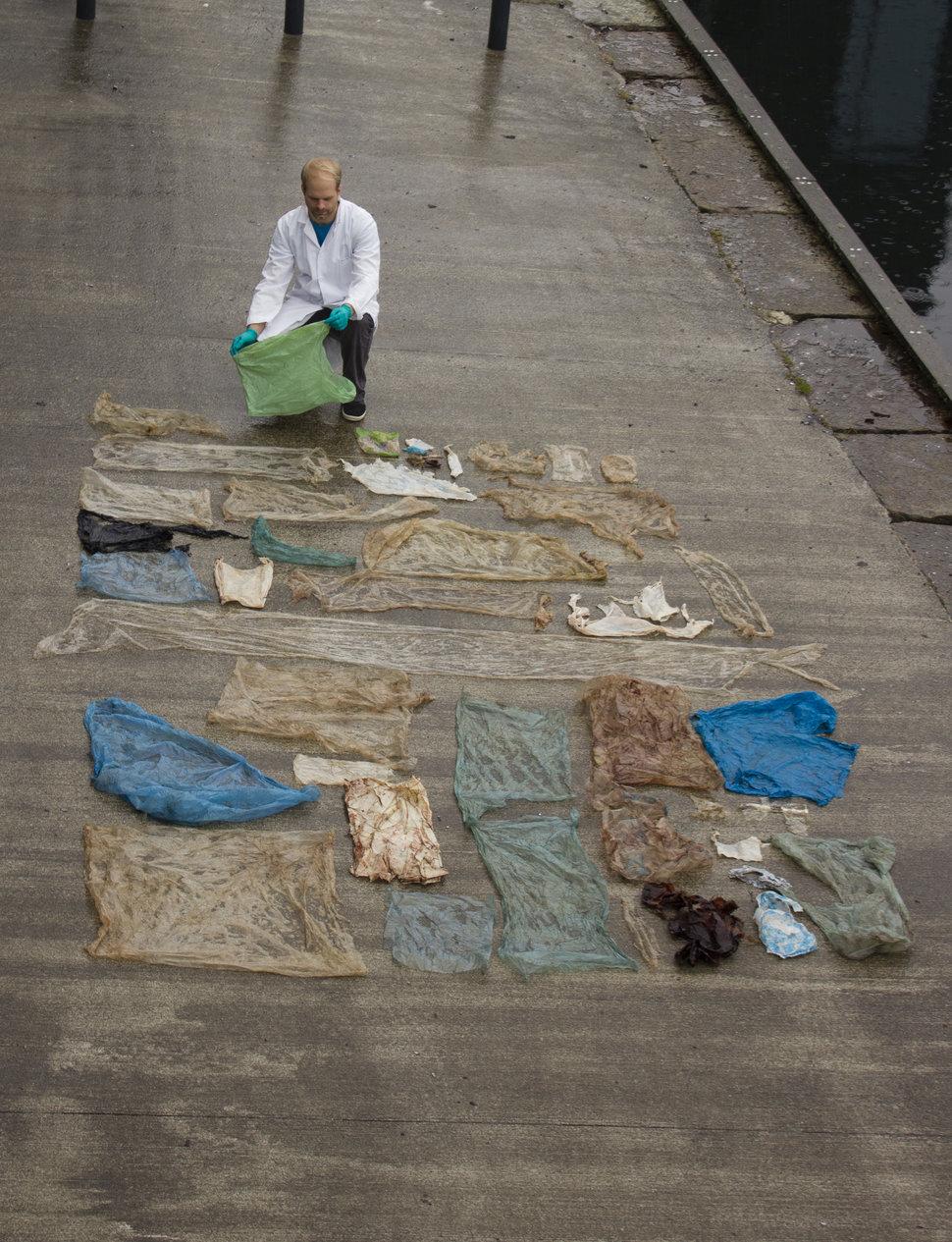 クジラの腸から引き出されたプラスチック袋
