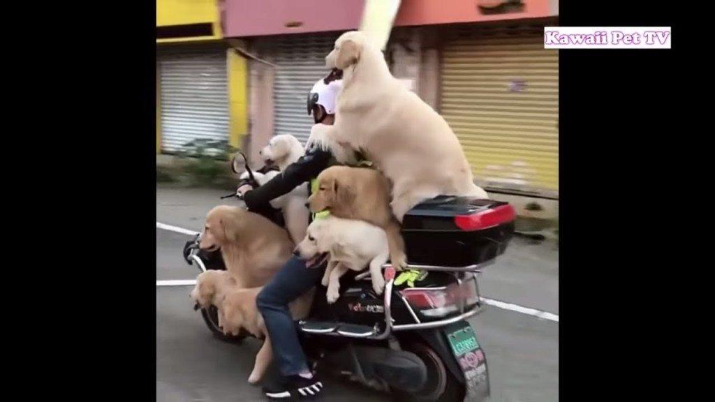 犬 おもしろ画像集